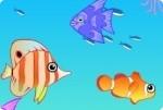 Aquarium einrichten