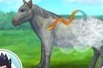 Pferd versorgen